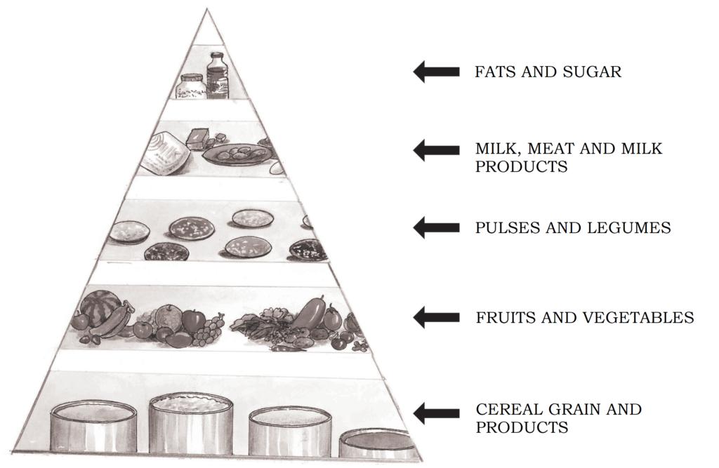 food guide pyramid ncert